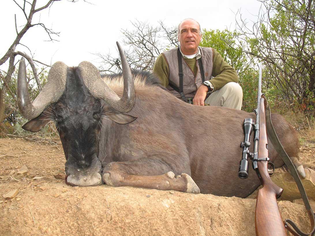 black-wildebeest-africa