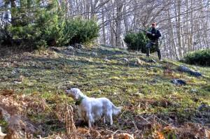 Divieto di caccia nei boschi veneziani