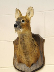 Whater Chinese Deer_003