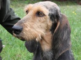 Test gratuiti sui cani da caccia