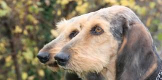 Alimentazione cane da caccia
