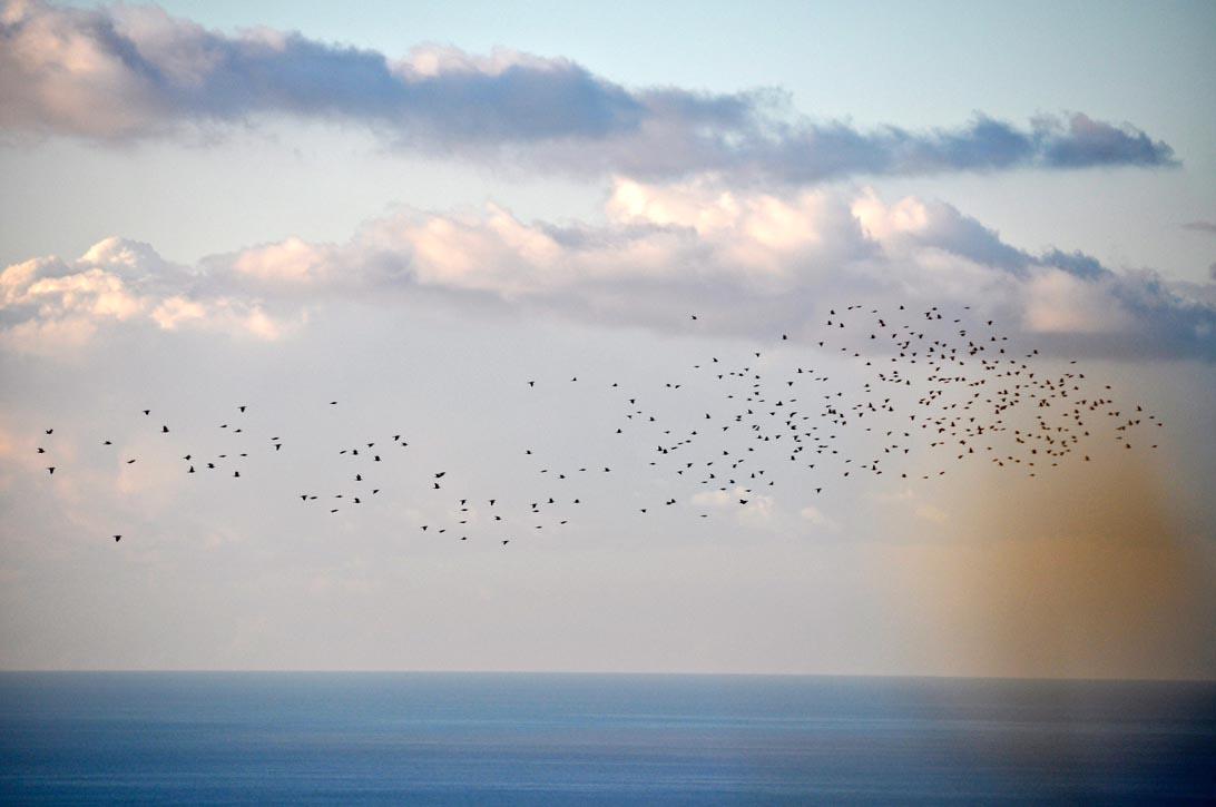 Branchi di colombi punteggiano di nero le nuvole alte
