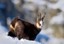 Calendario venatorio 2017-2018 della Valle d'Aosta