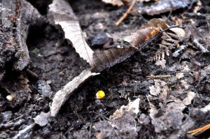 Il piccolo chicco di granturco che ha deciso le sorti della braccata