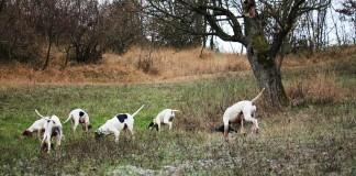 Cacciatori sardi