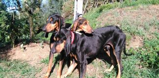 Genealogia Canina