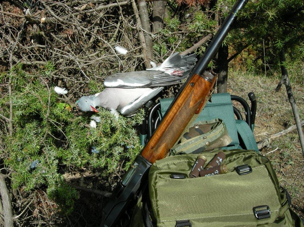 caccia al colombaccio