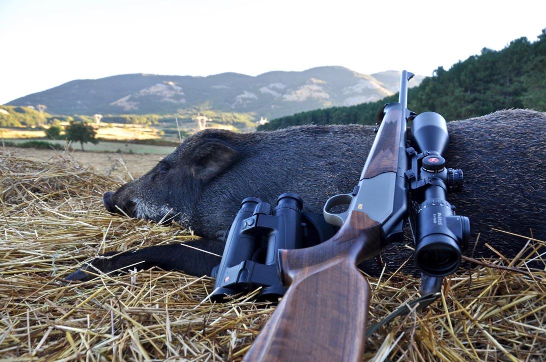 Battuta di caccia al cinghiale nel Pollino