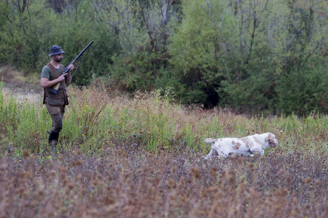 spinone da caccia