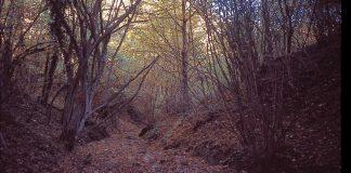 Selvaggina liberata nel bosco