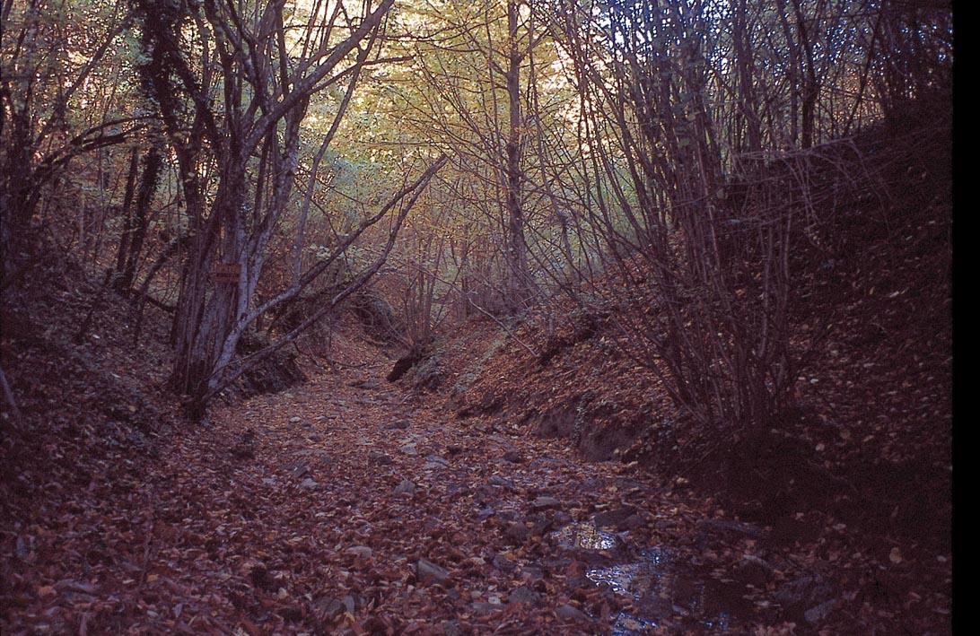 caccia alla beccaccia nel bosco