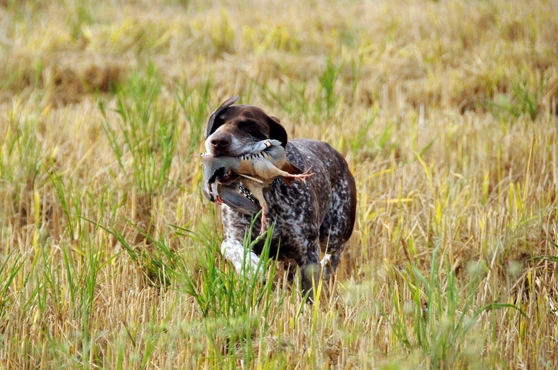 Riserva di caccia in Piemonte - Arborio