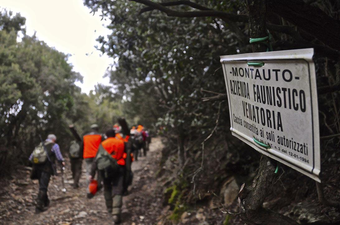 """AFV Montauto, uno dei """"santuari"""" della caccia al cinghiale."""