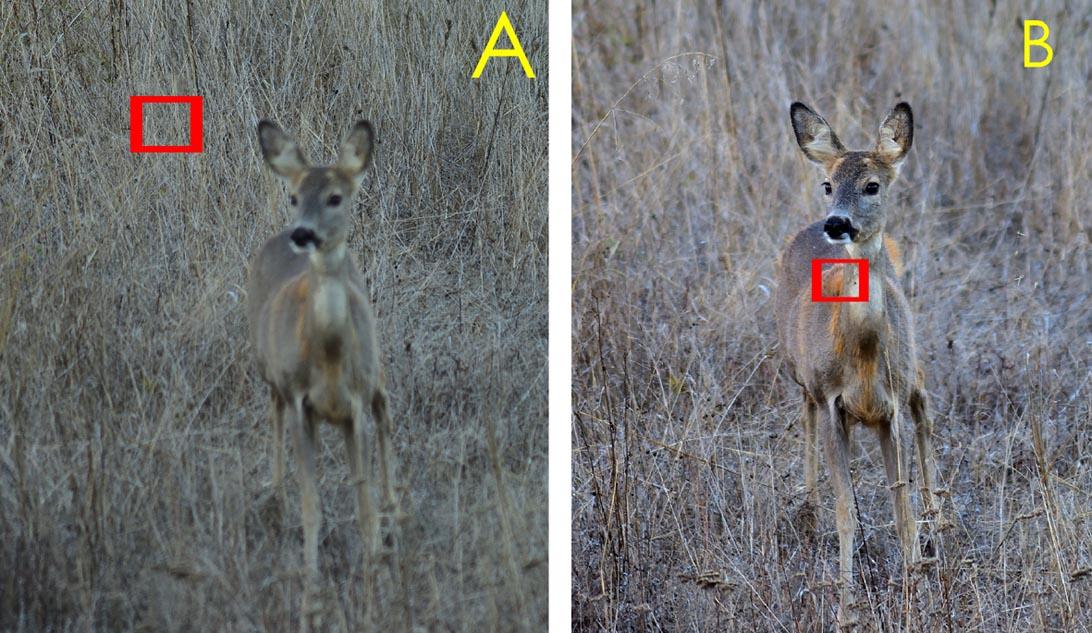 Nella foto A la MAF è stata impostata (sbagliando) sullo sfondo; nella foto B sul soggetto.