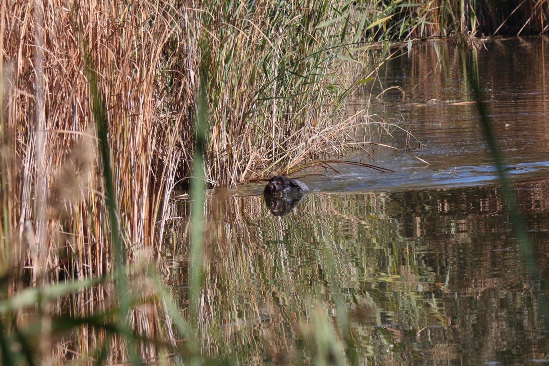 Hegewald - Una fase di lavoro in acqua (foto d'archivio).