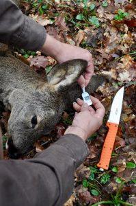 Il recupero di un capo ferito permette di scalare dal piano d'abbattimento un animale altrimenti non conteggiato