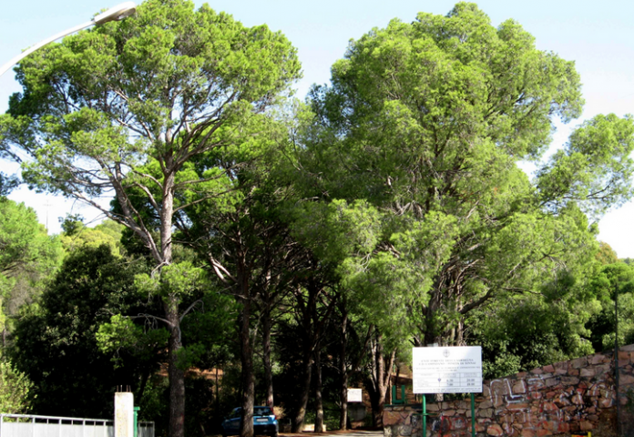 Parco della Pineta di Sinnai