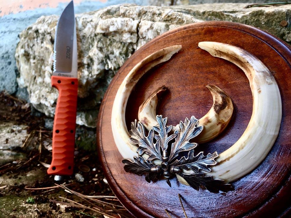 trofeo caccia al cinghiale