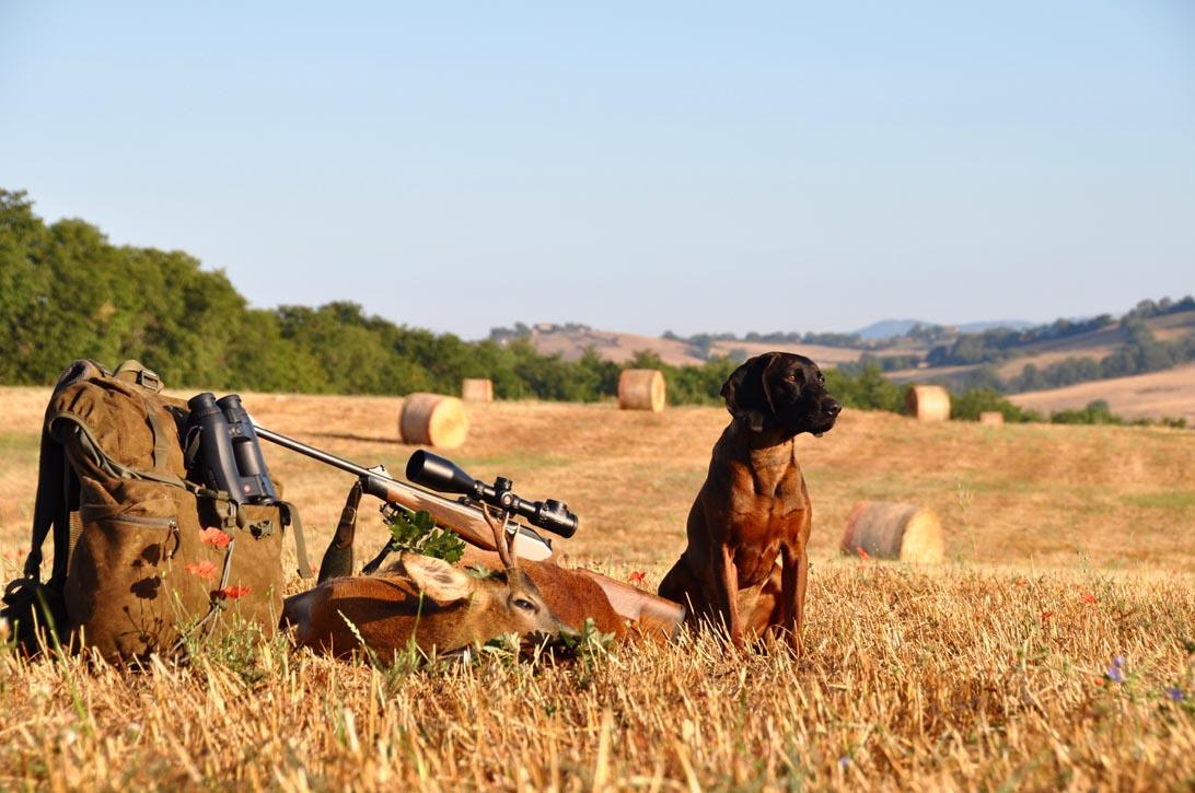 Caccia al capriolo di selezione in Toscana