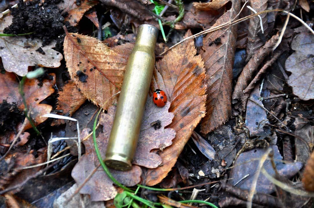 munizioni caccia al cinghiale