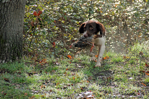 Cani da cerca