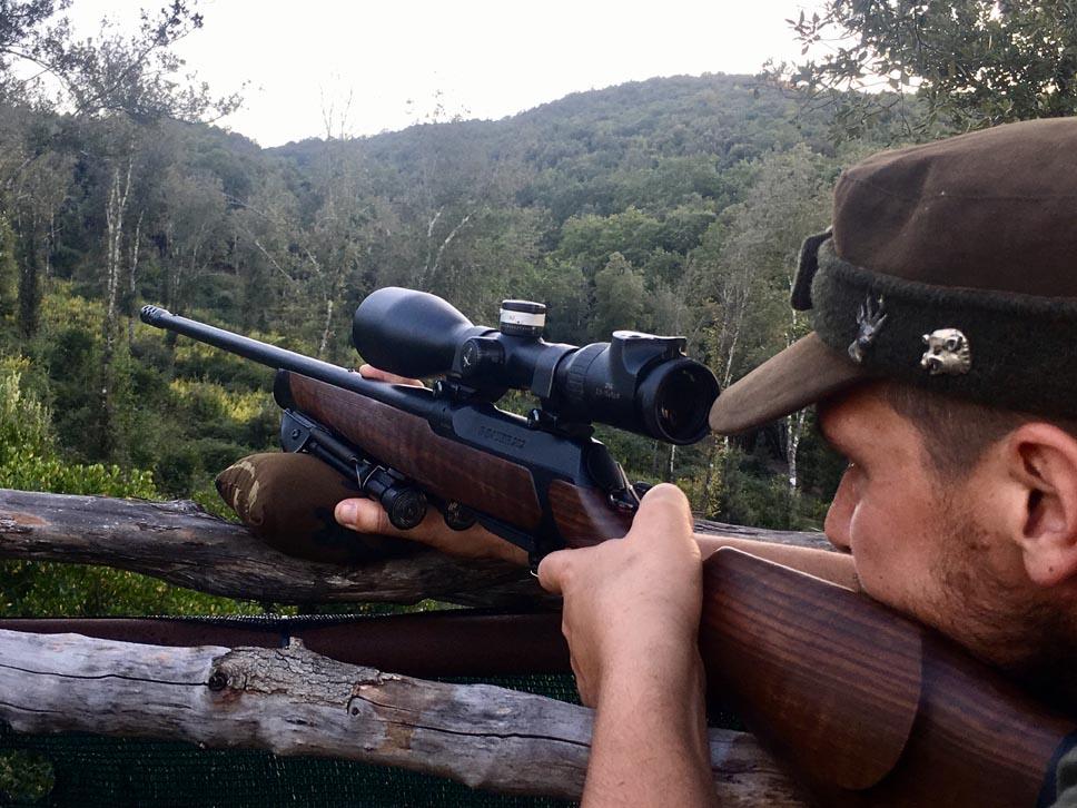 caccia al daino nel bosco