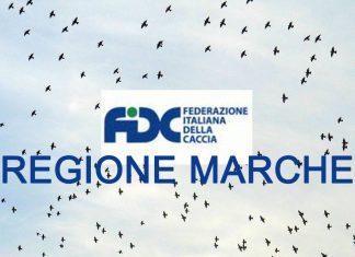 FIDC Marche