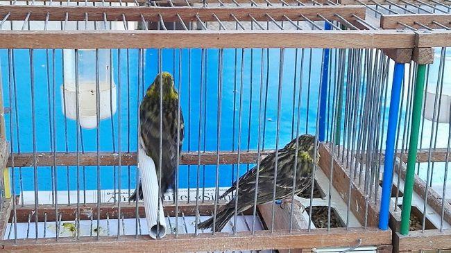 Fiere degli uccelli