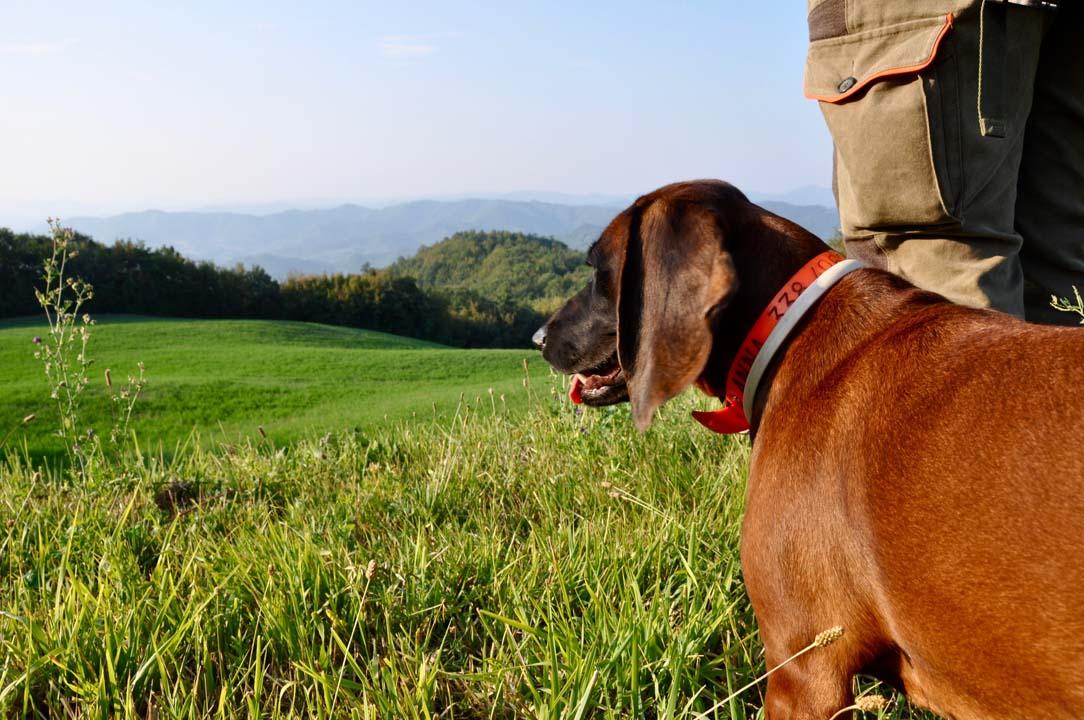 Caccia al capriolo | Anna, la bavarese di Francesco