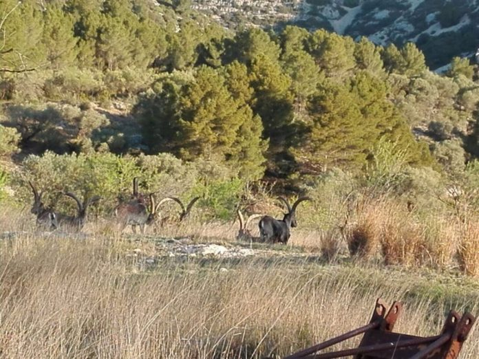 Montefeltro Spagna