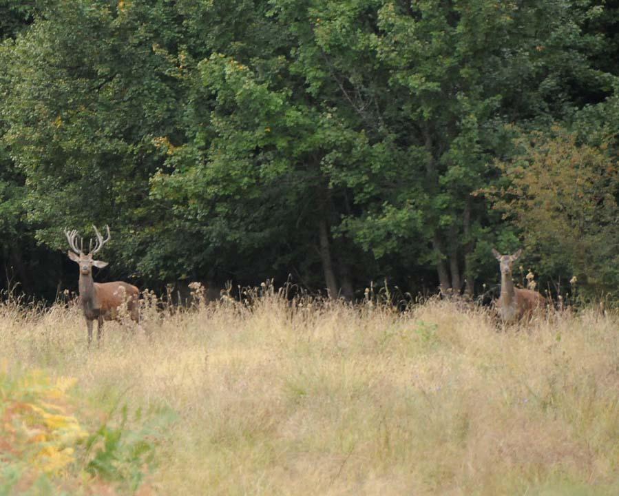 caccia al cervo in bulgaria