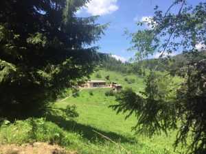 daino Bulgaria