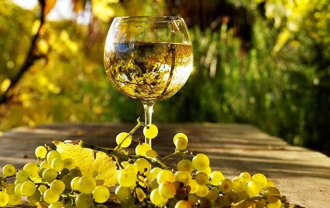 vino bianco albana