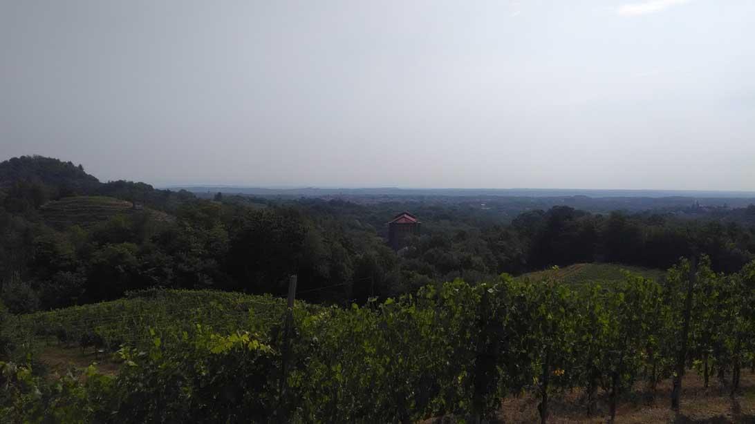 pianura novara vino rosso nebbiolo