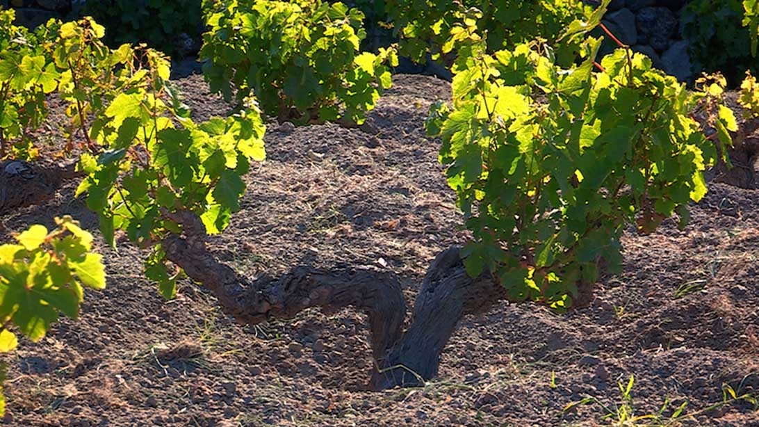 vino Pantelleria