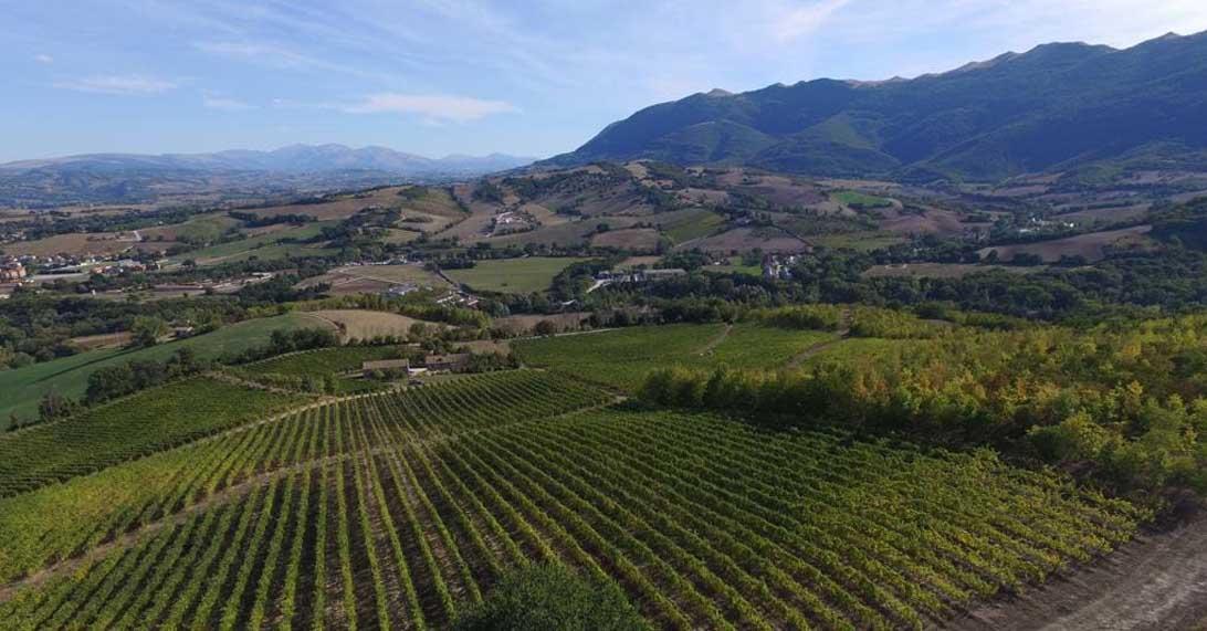 vigne verdicchio