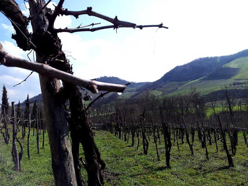 Tenuta Percivalle a Borgo Priolo
