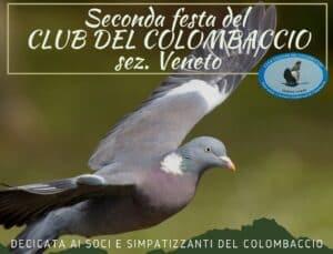 Colombaccio